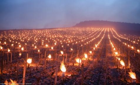 Lenyűgöző látvány: így védekeznek a francia szőlősgazdák a fagy ellen