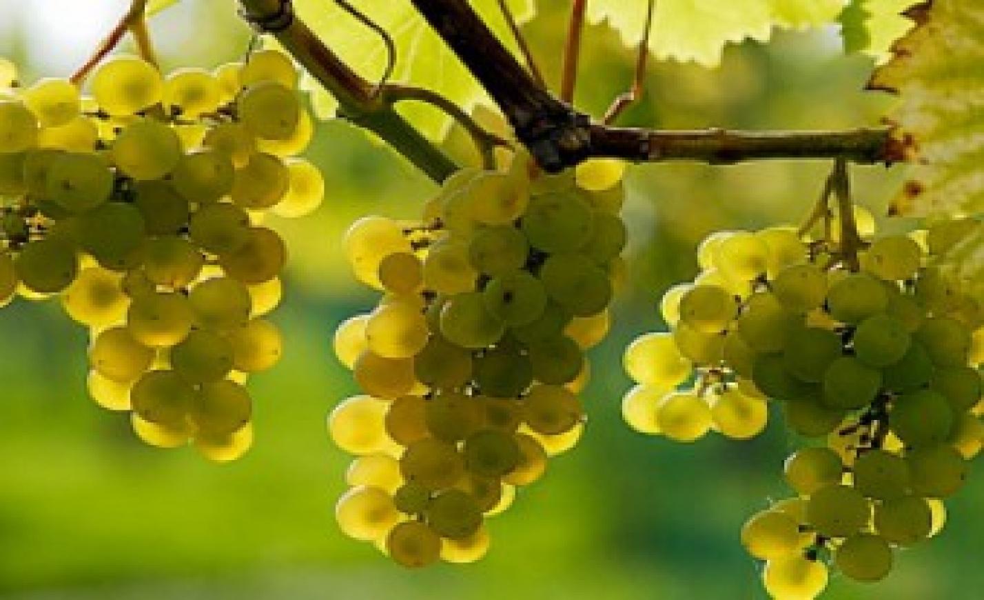 A magyar borászok technológiai fejlesztésekre pályázhattak