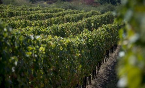 Az MTÜ 800 milliós támogatásából épül borturisztikai élményösvény az ismert borászcsalád cégeinek közreműködésével