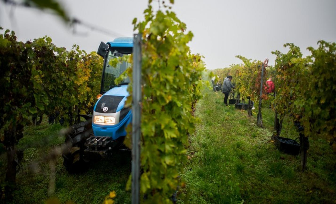 Fontos változás élesedett a borászati beruházások kifizetésénél: ez sokakat érinthet
