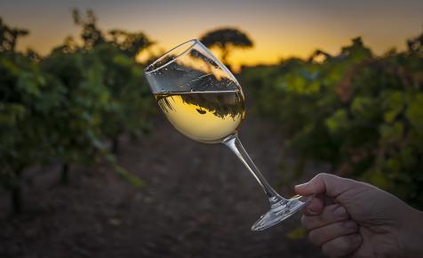 Itt minden a borokról szól majd