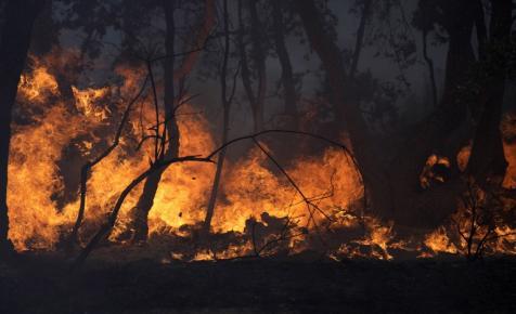 Pusztító tűz söpört végig a francia földeken: híres borászatok is súlyosan károsodtak