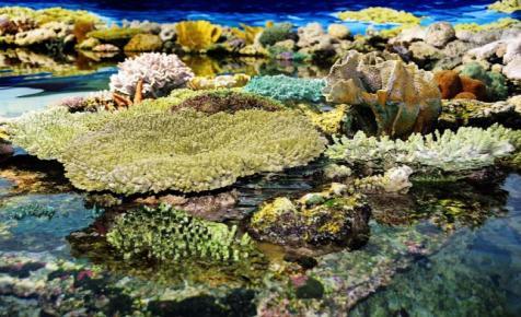 A beerdősítés segíthet megmenteni a korallzátonyokat a katasztrófától