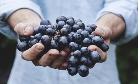 Az a csodálatos szőlőmag…
