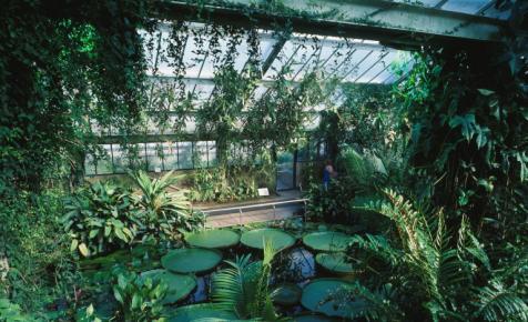 Elképesztő rekord: ki nem találnád, mekkora a világ legnagyobb növénygyűjteménye