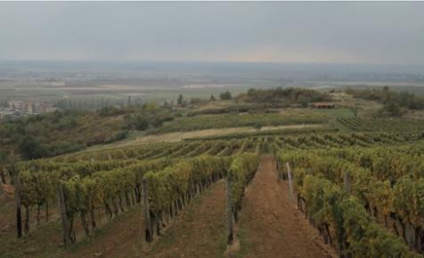 Először került be magyar borászat a világ 100 legjobbja közé