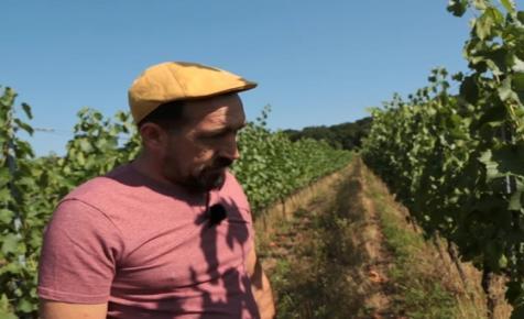 Épp a Balaton népszerűsége tehet keresztbe a híres helyi boroknak