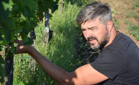 """""""Szeretem a szőlőm"""" – interjú Lenkey Géza szőlőbirtokossal"""