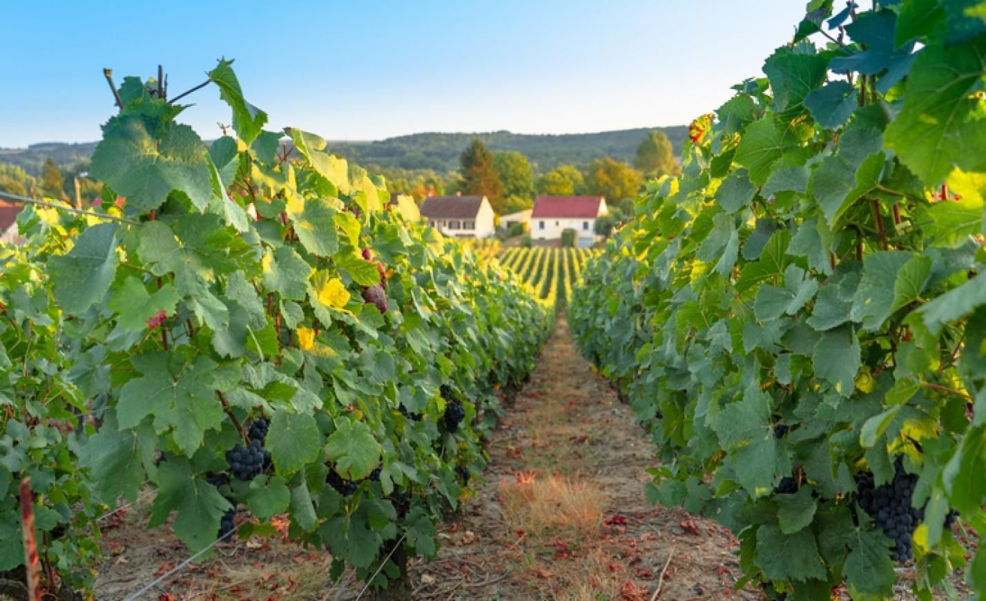 Itt a bejelentés: rendkívüli támogatást kapnak a magyar borászatok